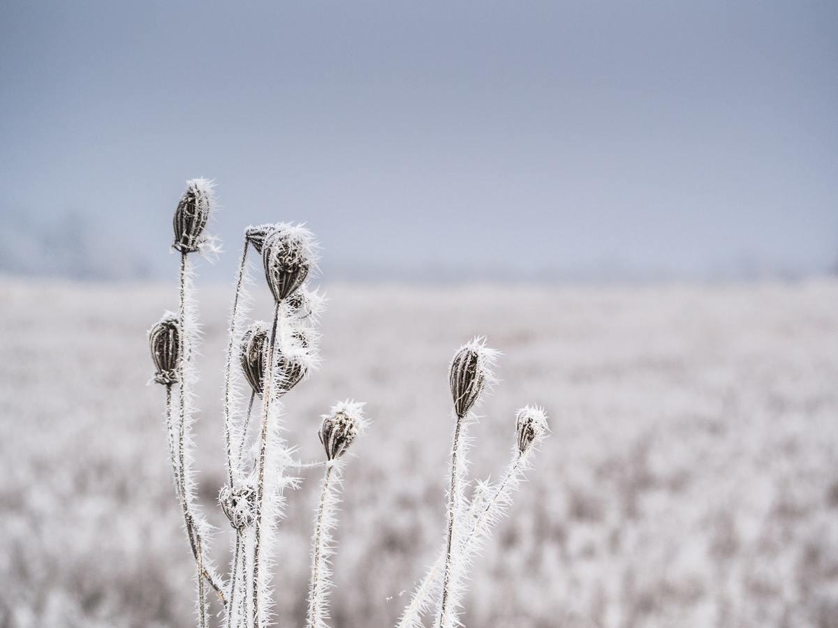 4 téli kommunikációs helyzet, amit minden hallássérült mumusa