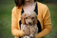 6 érv amellett, hogy legyen a segítő társad egy hangjelző kutya